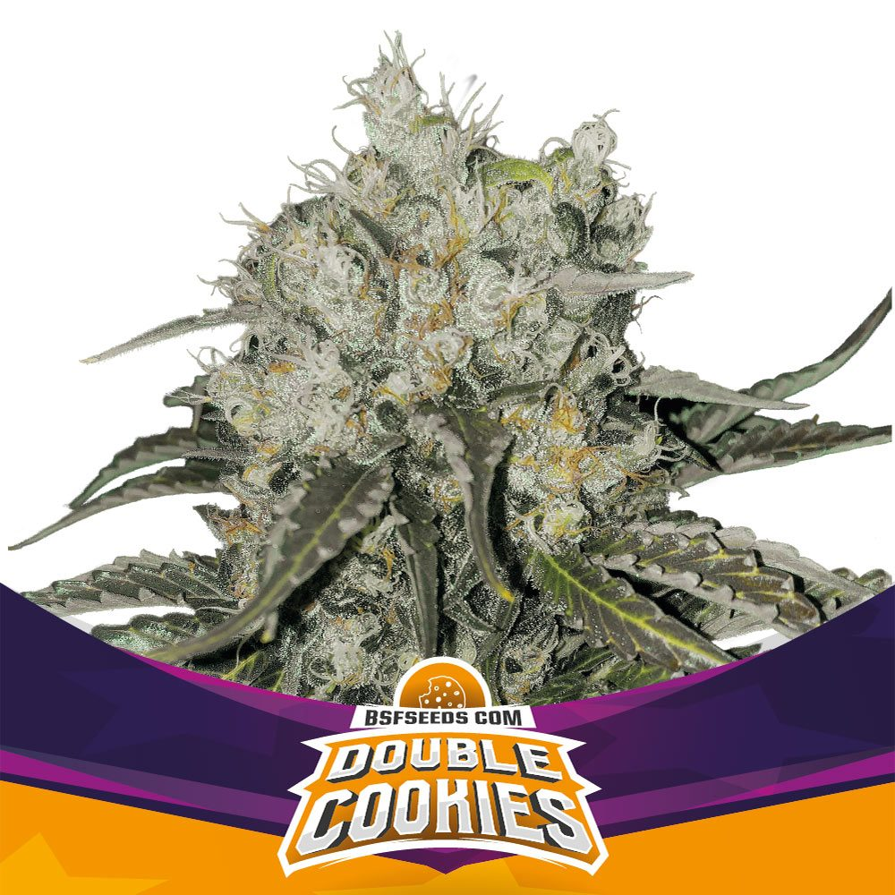 DOUBLE COOKIE FEM (7) - BSF SEEDS