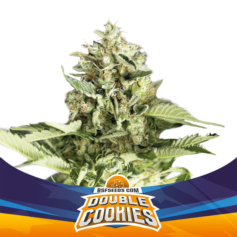 DOUBLE COOKIE AUTO (2)(4)(7)(12) - BSF SEEDS